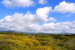 Spring in Sardinia - Sardinia, Italy (7)