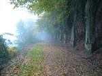 Along the River Tarn in the morning mist - Albi, France (3)