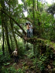 Hiking in the rainforest, playing upon a fallen tree - Cameron Highlands, Malaysia (11)