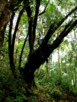Hiking in the rainforest and climbing trees - Cameron Highlands, Malaysia (12)