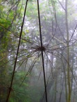 Hiking in the rainforest, spider like twigs with misty backdrop - Cameron Highlands, Malaysia (15)