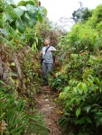 Hiking in the rainforest, fighting through the thick jungle - Cameron Highlands, Malaysia (23)