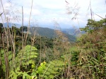 Panorama of the rainforest and surrounding hills - Cameron Highlands, Malaysia (3)