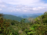 View across the rainforest - Cameron Highlands, Malaysia (5)