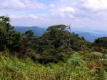 Hiking in the rainforest - Cameron Highlands, Malaysia (7)