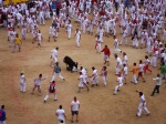 A young bull attempts to defend itself against the crowds, taken inside Pamplona Bullring - San Fermín - Pamplona, Spain (25)