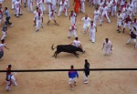 A young bull attempts to gore one of the runners, taken inside Pamplona Bullring - San Fermín - Pamplona, Spain (27)