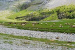Cows grazing in the Ordesa Valley - Ordesa y Monte Perdido National Park, Spain (41)