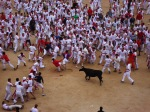 The Running of the Bulls inside Pamplona bullring - San Fermín - Pamplona, Spain (5)