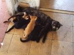 Madrid squat – Kittens milking - Madrid, Spain (8)