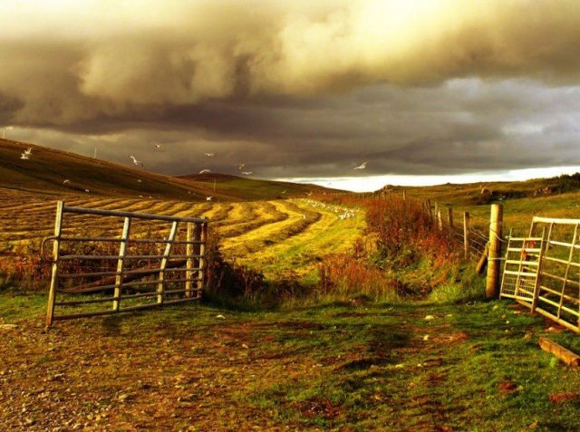 Berry Farm, Scalloway, Shetland Islands, UK - by Anne MacDonald