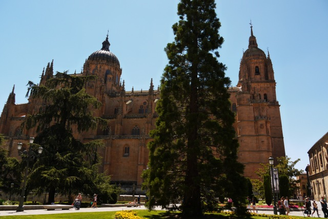 The northern side of New Cathedral Salamanca, taken from Anaya square - Salamanca, Spain (40)