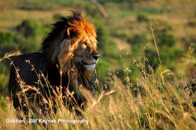 Gokhan-Elif Kaynak Photography - Maasai Mara National Reserve, Kenya