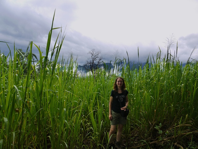 Hiking in the north of Thailand - high grass