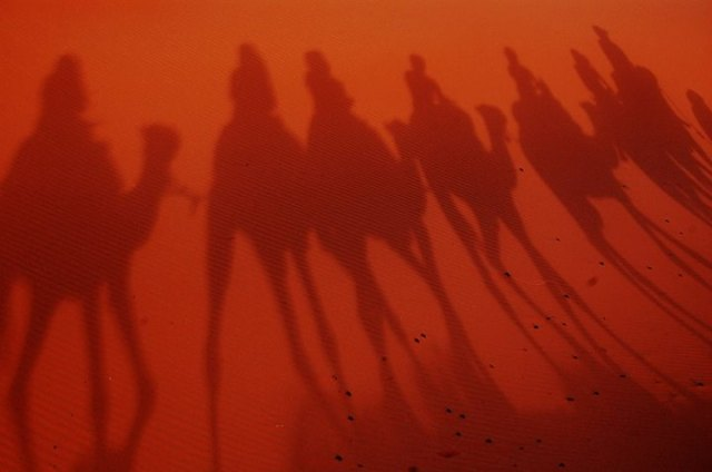 Camel Silhouettes on the sands of the Sahara Desert, Morocco - Charlotte Ainslie
