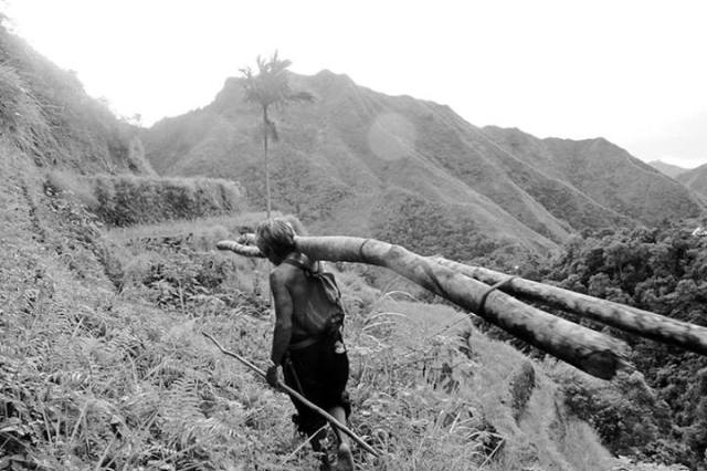 New Crop - During a hike to a neighboring village in Batad, Philippines