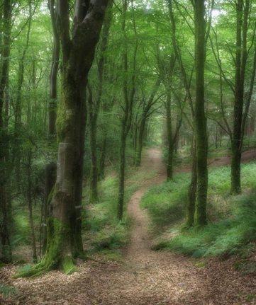 Frank Mul - Glenabo Noreen woodland near Fermoy, Ireland